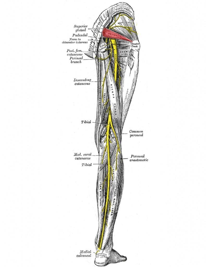 Sciatic Nerve Pain Sciatica Advanced Myotherapy Carlton